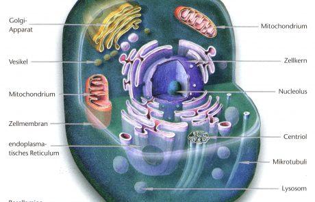 Eucyte Grafik II