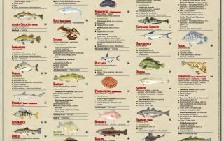 Greenpeace Fischratgeber Kuehlschrankposter 2016
